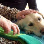 10 veelgestelde vragen over dieren in de zorg