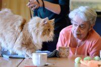 Zorgdier kat op bezoek bij bewoonster