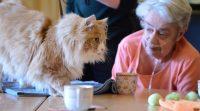 Als de kat van huis is, vieren de bewoners feest