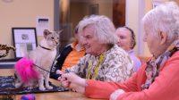 Humanitas DMH en ZorgDier zoeken vrijwilligers voor nieuw project Den Haag